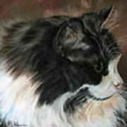 Dusty Our Handsome Norwegian Forest Kitty Art Print