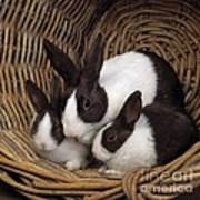 Dutch Rabbit With Young Art Print by E A Janes