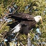 Eagle 1982 Art Print