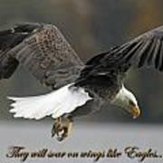 Eagle 2 Art Print