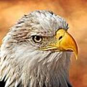 Eagle At Sunset Art Print