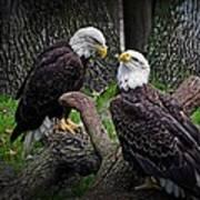 Eagle Couple Art Print
