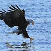 Eagle Grab Art Print
