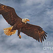 Eagle In The Sky Art Print