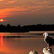 Eagle On Stump Overlooking Water At Sundown Art Print