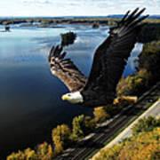 Eagle Over Mississippi  Art Print