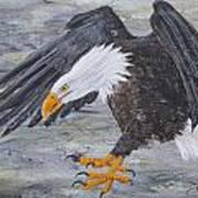 Eagle Study 2 Art Print