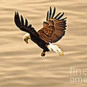 Eagles Pause Art Print