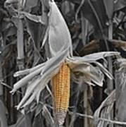 Ear Of Corn Art Print