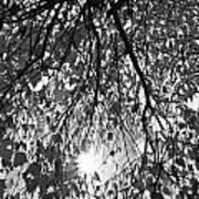 Early Autumn Monochrome Art Print