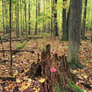 Early Autumn Woods Art Print