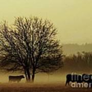 Early Morning Fog 008 Art Print