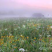 Early Morning Meadow Art Print