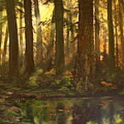 Early Morning Sun On Cannock Chase Art Print