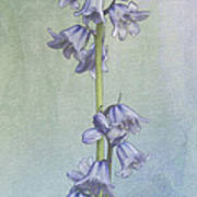 Easter Hyacinth Art Print