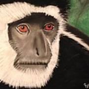 Eastern Colobus Monkey Art Print