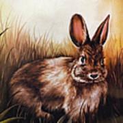 Eastern Cottontail Rabbit Art Print