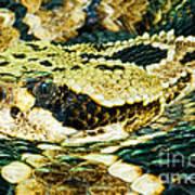 Eastern Diamondback Rattlesnake Art Print