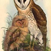 Eastern Grass Owl Art Print