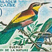 Eater Conservation Camargue Art Print