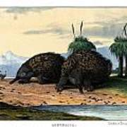 Echidna Or Porcupine Anteater Art Print