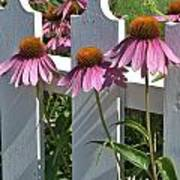 Echinacea And A White Picket Fence Art Print