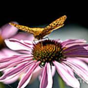 Echinacea And Friend Art Print