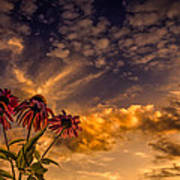 Echinacea Sunset Art Print by Bob Orsillo