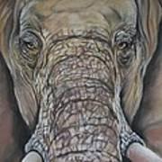 Echo Of The Elephants  Art Print