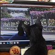 Eclipse Watching Herself On Computer Monitor Art Print
