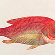Eekan Bambangan Print by Chinese School