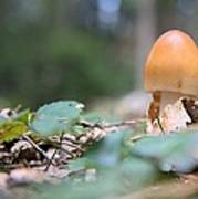 Egg Poppin Fungus Art Print