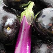 Eggplant I Art Print