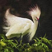 Egret 12 Art Print