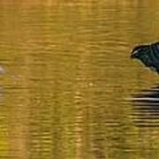 Egret And Canada Goose Art Print