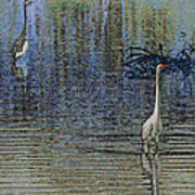 Egret And Heron Watching Art Print