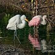 Egret And Pink Spoonbill Art Print