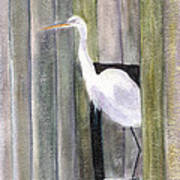 Egret At John's Pass Art Print