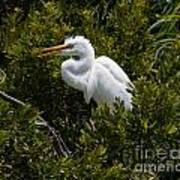 Egret In Bushes Art Print