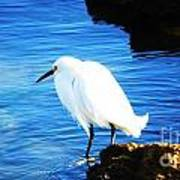 An Egret In St. Augustine Art Print