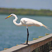 Egret On A Pier Art Print