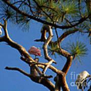 Egret Spoonbill And Stork Art Print