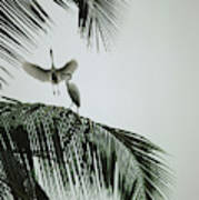Egrets In A Palm Tree, Bali, Indonesia Art Print
