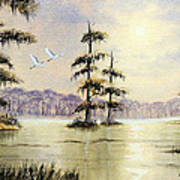 Egrets Over Wakulla Springs Art Print