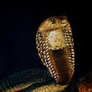 Egyptian Cobra Art Print