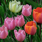 Eight Tulips And One Bee Print by Muriel Levison Goodwin
