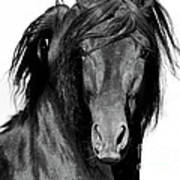 El Caballo Negro Art Print
