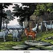 Eland Pallah Koodoo Art Print