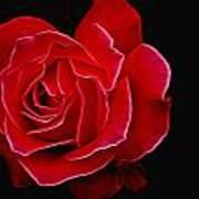 Electric Rose Art Print