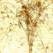 Electron Positron Particle Shower Art Print by Spl